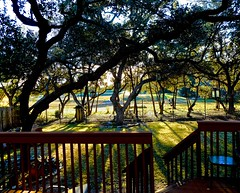 Morning Sun (malcolmharris64) Tags: trees sunrise austin landscape backyard texas liveoak greenbelt juniper