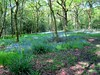 Bluebell woods in May (Heaven`s Gate (John)) Tags: england flower green nature bluebells season landscape woods walk may solihull 2016 earlswood johndalkin heavensgatejohn