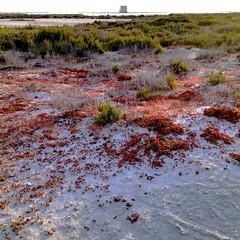 Salinas y Arenales de San Pedro del Pinatar 201117 (Gabriel Navarro Carretero) Tags: casa sand plantas salinas arena sandbanks dunas arenales sanpedrodelpinatar airelibre