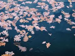 2015-11-10 07.26.43 1 (anastasiya_klenyaeva) Tags: trees sky nature russia autmn     saratov vsco vscocam vscorussia vscosaratov