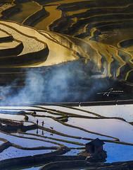 Rice terraces YuanYang (Albert Photo) Tags: abstract landscape farmer riceterraces peasant yuanyang chinareflection