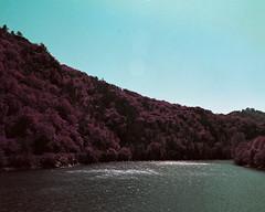 Sur le Barrage de Queuille (saturedcamtar) Tags: france tree 120 water analog forest river french lomography eau purple violet foret arbre barrage auvergne sioule queuille lomochrome saturedcamtar
