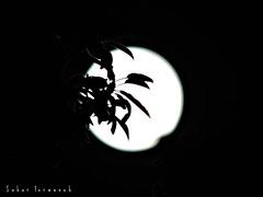 Shadow (StRo92) Tags: shadow moon beauty full