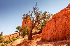 Red Canyon Lone Tree (JuneBugGemplr) Tags: utah rocks redcanyon