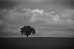 Solitude (C-Smooth) Tags: tree nature landscape horizon ciao