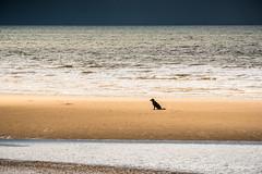Kinmel Bay. June 2016-19 (revpdwilson) Tags: kinmelbay nikon28300mmvr nikond750 northwales seaside coast naturallight