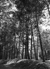 Parc De Biez - Mondeville (CyndiieDel) Tags: blackandwhite white black france nature noir noiretblanc normandie paysage extrieur arbre parc blanc calvados mondeville bassenormandie parcdebiez