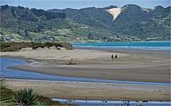 90 Mile Beach, North Island DSC_1823 (janet.oxenham10) Tags: sea newzealand horses beach landscape northisland 90milebeach ahipara