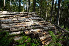 Woodpile (steve_whitmarsh) Tags: wood trees forest scotland aberdeenshire scolyhill
