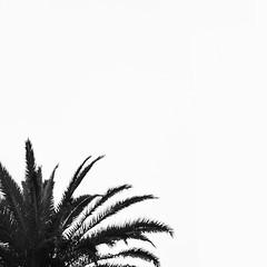 Spider branches (Carolina Gonzales G.) Tags: blackandwhite minimalism minimalismo monochrone