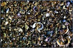 ... SDIM2715 (*melkor*) Tags: stilllife macro art beach nature colors seashells dark geotagged dead seaside colours experiment ground minimal soil seashell casual conceptual melkor casuality trashbit aseashellscarpet anabstractnatureproject