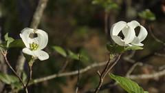 DSC02925 (wsmurrie) Tags: plantsandfungi