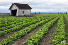 Garage Of Green Furrows (Ian Sane) Tags: door sky green field lines oregon landscape ian photography highway open farm empty garage images agriculture leaning gervais furrows sane 99e of