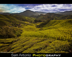 Cooling off in the Cameron Highlands (Sam Antonio Photography) Tags: blue green nature colors clouds southeastasia malaysia kualalumpur tanahrata cameronhighlands teaplantation travelphotography landscapephotography diffusedlight bohteaplantation travelfish teagrowing earthasia samantonio samantoniocom travelfishcameronhighlands lonelyplanetcameronhighlands malaysiadestination photographingthecameronhighlands