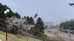 CIMG8760 (Comrade Anatolii) Tags: northkorea pyongyang   pjngjang