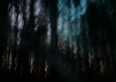 forests becoming something else (wood_owl) Tags: trees sunset ohio blur nature pine