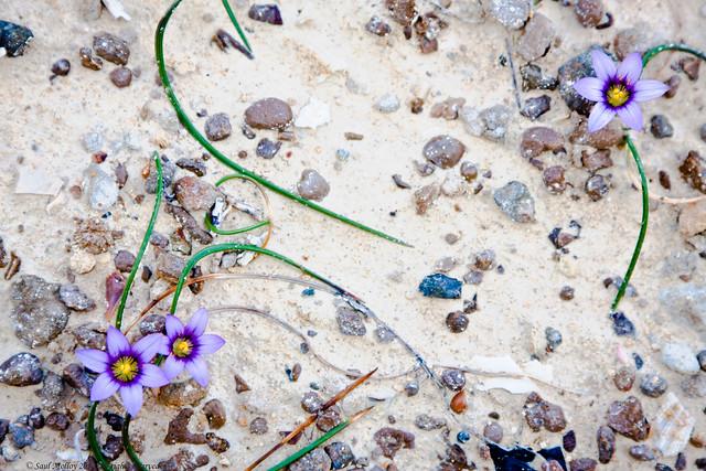 Sand Flowers