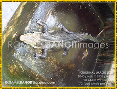 IMG01381-20110214-0928 (ROMMELBANGIT BB2) Tags: photojournalism rightsmanaged melphoto rommelbangit daddypro rommelbangitimages