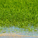20120529_RICE BLOGS AND SEEDING 0239 Online copy
