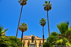 "Palermo Palm Trees • <a style=""font-size:0.8em;"" href=""http://www.flickr.com/photos/40100768@N02/7359525776/"" target=""_blank"">View on Flickr</a>"
