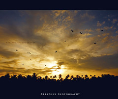 Leaving towards a better day (Praphul.T.) Tags: sky sun india birds sunrise canon eos kerala silhoutte 550d irinjalakuda
