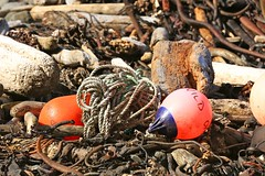 Lost   Fishing Floats and Driftwood Awatotara Reserve Chatham Island New Zealand