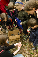 Oakley Wood woodland craft fair and Bioblitz April '14 (Warwickshire Wildlife Trust) Tags: nature wildlife conservation leamington warwickshire oakley wildlifetrust bioblitz warwickshirewildlifetrust oakleywood