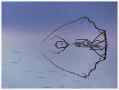 Esqueleto (Paulina58) Tags: naturaleza colores salinas alicante rama paulina torrevieja airelibre paulina58