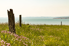 Devon coast (Keith in Exeter) Tags: uk sea england cliff plant seascape flower grass fence landscape coast post outdoor horizon devon thrift gb hazy budleighsalterton otterton
