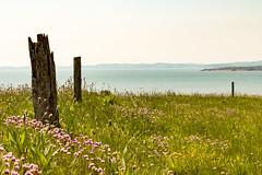 Devon coast (Keith in Exeter) Tags: uk sea england cliff plant seascape flower grass fence landscape coast post outdoor horizon devon thrift gb hazy budleighsalterton otterton