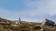 Strange Looking Rock (TheWildFireOne) Tags: sky snow mountains scotland highlands hare doll angus glen hills munro 500px