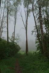 10 (spoilt.exile) Tags: nature weather fog forest dark ukraine kyiv україна київ