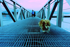 2016/366/145 On a mission (Edna Winti) Tags: vancouver coalharbour ednawinti 2016366