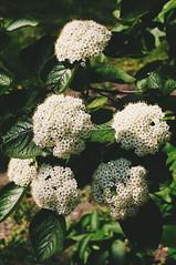 2016-05-12 12.08.50 1 (anastasiya_klenyaeva) Tags: flowers trees sky macro nature spring russia autmn     saratov  vsco vscocam vscorussia vscosaratov