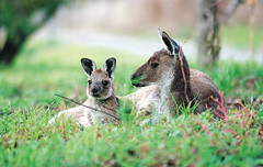"SNAP-160518 • <a style=""font-size:0.8em;"" href=""http://www.flickr.com/photos/48334191@N00/27082070875/"" target=""_blank"">View on Flickr</a>"