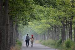 Take a walk (allenchuang_yh) Tags: nikon taiwan tainan    landscap sidelight salonphotography  70300mmf456apodgmacro d7100
