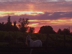 Pegasus (gretagrandi992) Tags: pegasus whitehorse violet pink red dawn sunset sky horse