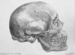 Porter Carol skull (hanks students artwork) Tags: 2016 takoma mc portrait drawing advanced skull