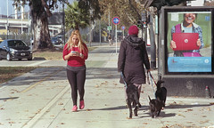 (Analgica) (guspaulino1) Tags: buenosaires gente ciudad dia animales mascotas seales atgentina