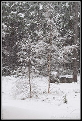 Snowing today 4th May 2012 (mmoborg) Tags: sweden sverige mmoborg mariamoborg
