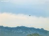 Limbara - L'istante sospeso - Suspended moment (Forest (GKweb.it)) Tags: mountain bird contrast montagna kestrel hovering falcotinnunculus contrasto sx20 gallura limbara gheppio canonsx20is canonsx20