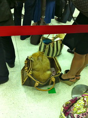 nyc dog airport jfk louisvuitton dogcarrier