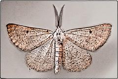... IMG_1161 (*melkor*) Tags: macro art water night dark geotagged death wings darkness moth experiment minimal pole teen waters conceptual melkor trashbit adeathlywatersproject deathbythewaters abeautifuldeadiii