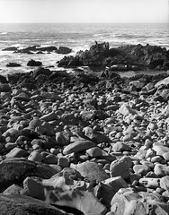 Salt Point - 7 (Summicron20/20) Tags: camera field kodak c trix 8x10 300mm master txt fujinon saltpointstatepark 320txp f85 kmv masterview