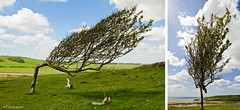 change your perspective to see the world in a different way. (Patrick Mayon) Tags: england tree nature field landscape vent sussex countryside wind sunny bluesky angleterre paysage campagne arbre champ ensoleill
