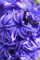 2012 05 06_d7000_0099 (swedgatch) Tags: flowers color macro art nature spring nikon sweden tamron 90mm d7000 swedgatch