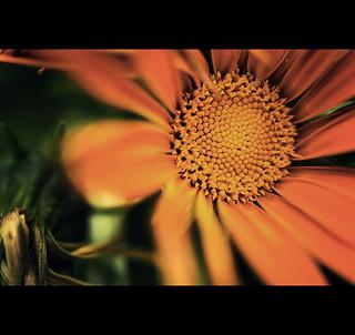 Orange Close-Up