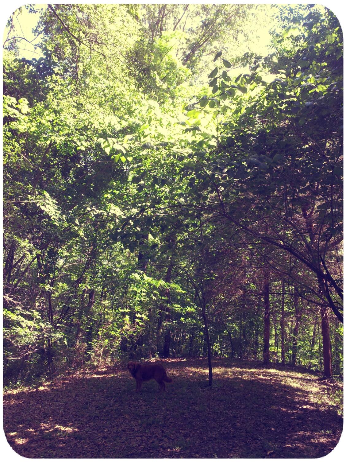 2012-04-23 15.10.18_Roxy_Round.jpg