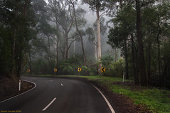 The Road to Emerald (Ranga 1) Tags: mist fog forest nikon rainforest australian australia melbourne victoria jungle emerald dandenongs dandenongranges gumtrees davidyoung tokina1224mmf4 thedandenongs