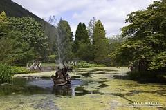 Benmore (DMeadows) Tags: flowers trees fountain garden pond flora argyll algae botanics benmore benmorebotanicgardens davidmeadows dmeadows davidameadows dameadows yahoo:yourpictures=yourbestphotoof2012